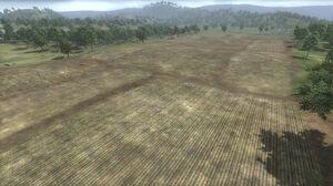 Agincourt Field