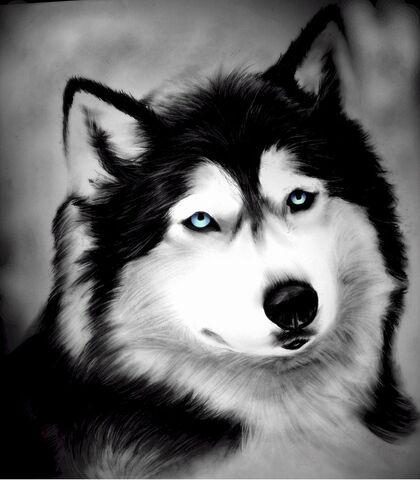 File:Alaskan wolf charcoal drawing by desiangel1-d38iww1.jpg