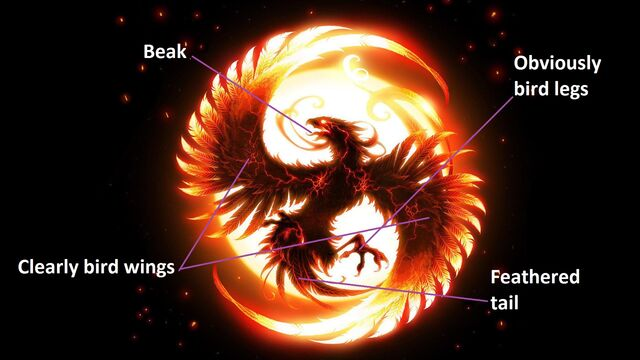 File:It's a phoenix not a dragon.jpg