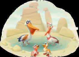 Pelican Family