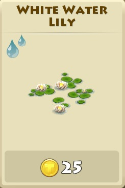 File:White water lily.jpg