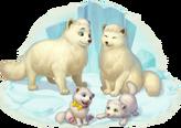 Arctic Fox Family