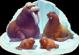 Walrus Family