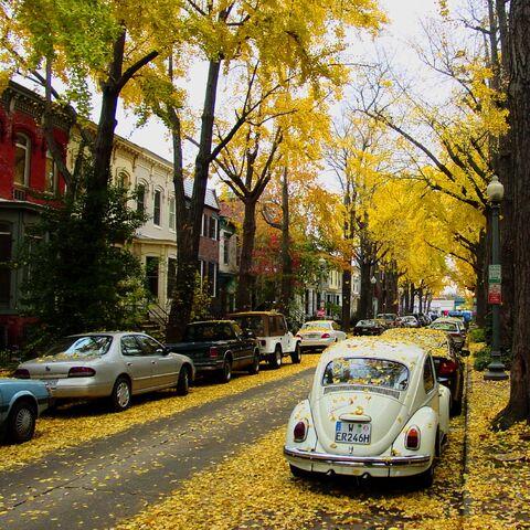 File:Autumn in DC-8370.jpg