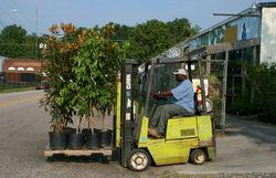 2008-07-26 Clark GCS-15 forklift transporting potted trees