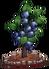 Blueberries (fully grown) - Farming 2016