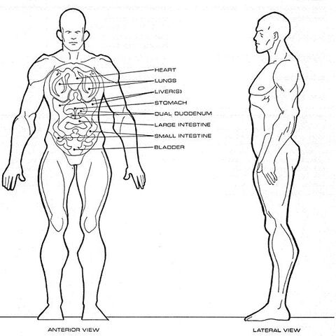 File:Klinzai physiology.jpg