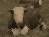 Mad Cow Scare