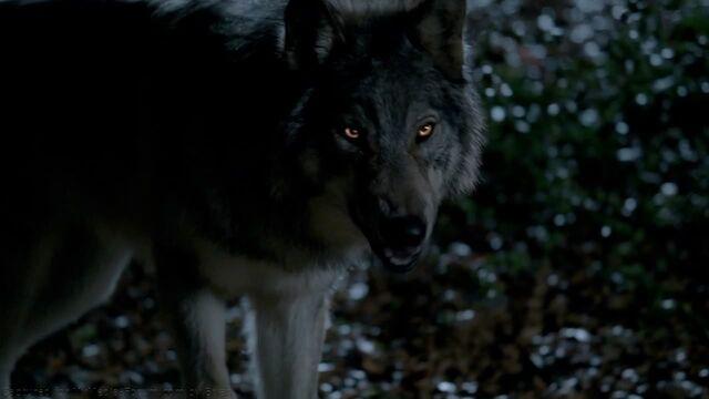File:Billvwolves.jpg