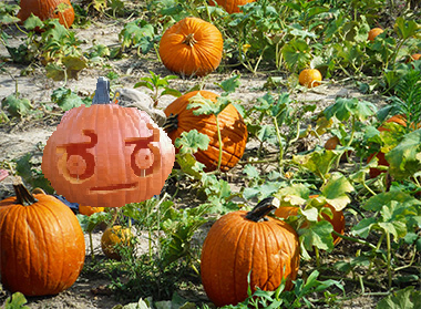 File:Pumkin family photo.png