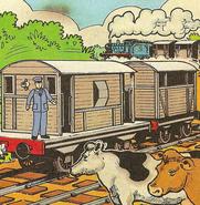 Cows(magazinestory)3