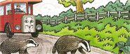 Badgers'Way2
