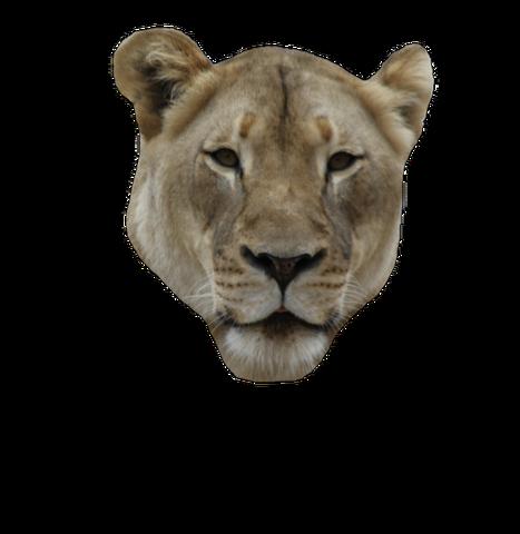 File:Lion-closed.png