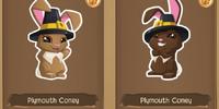Plymouth Coney Bunny