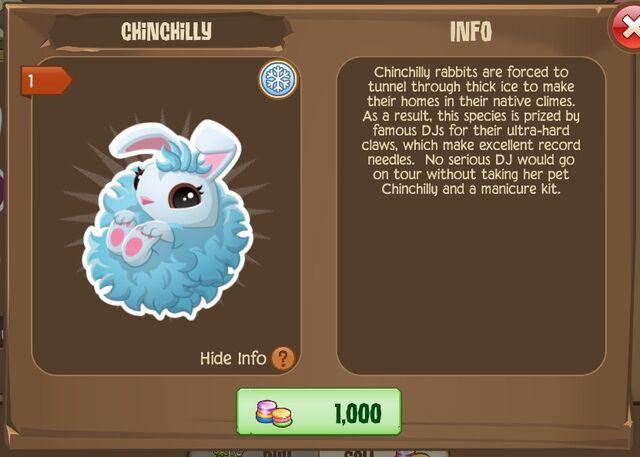 File:Chinchilly Bunny 2 (Info).jpg