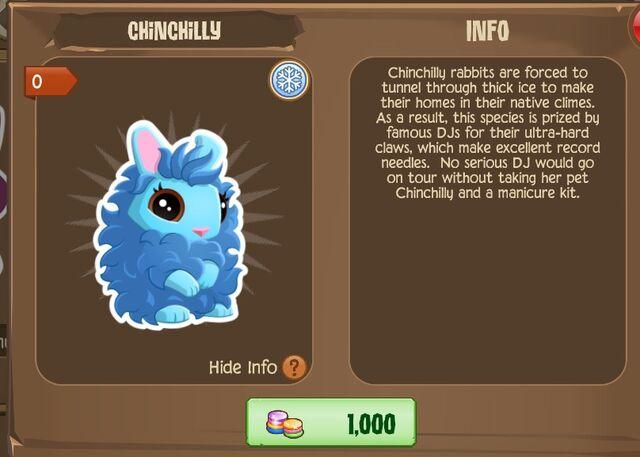 File:Chinchilly Bunny 1 (Info).jpg