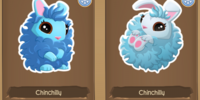 Chinchilly Bunny