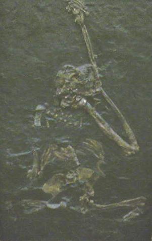 File:Oreopithecus.jpg