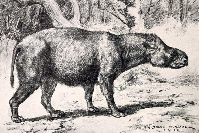 File:Subhyracodon tridactylus-1-.jpg