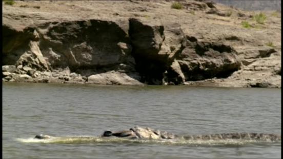 File:Sarcosuchus2.png