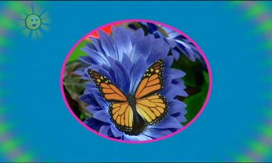 Butterfly-0