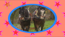 Horses (Tweenies)