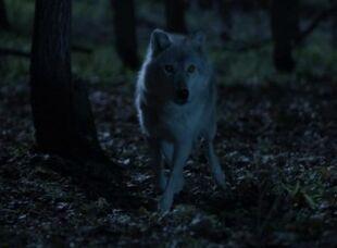 724px-Dyson wolf