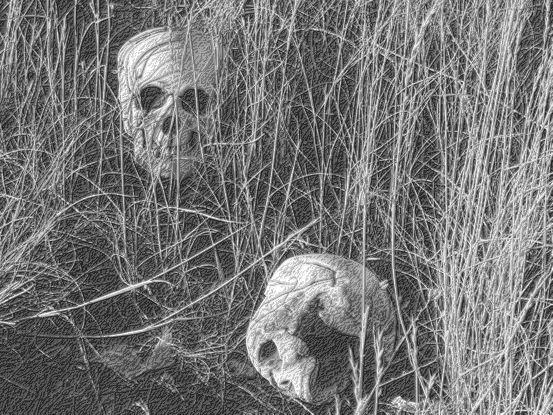 File:Skulls 1.jpg