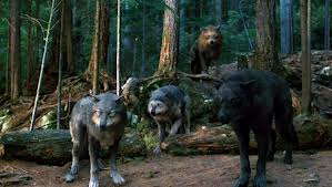 File:Wolf pack in wolf forms.jpg