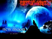 The-Twilight-saga-New-Moon-wallpaper