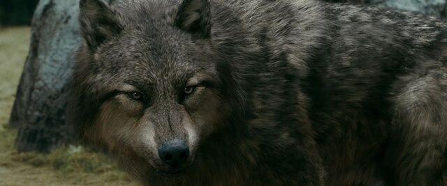 File:Werewolves 5.jpg