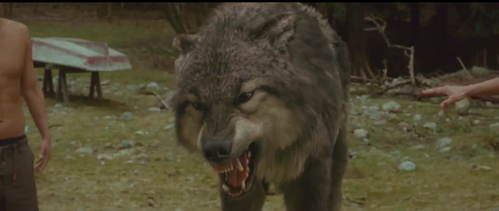 Paul Growling WolfForm