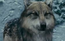 File:Twilight wolf .png