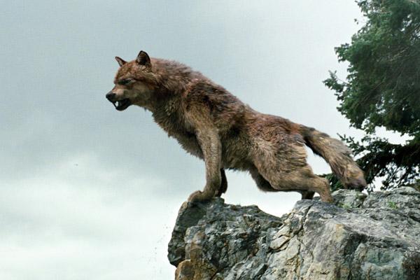 File:Wolfonrocks.jpg