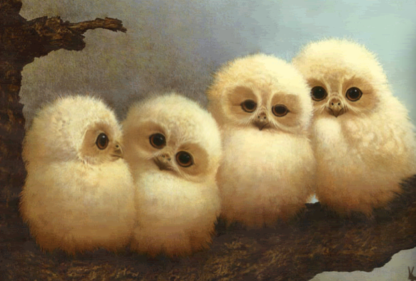 File:Baby Barn Owls.png