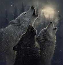 File:Wolves .jpg