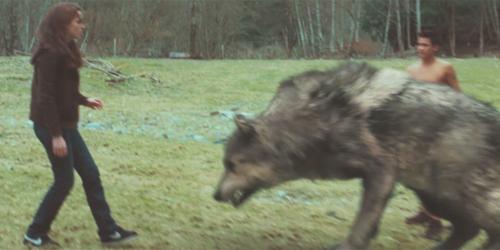 File:Paul-wolf.jpg