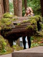 Rosalie-tree-log-breaking-dawn