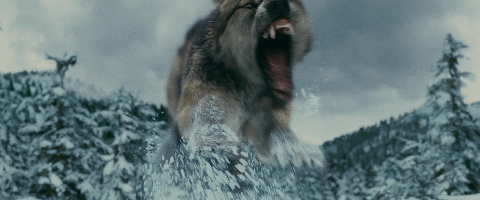 File:Wolf-attacking.jpg