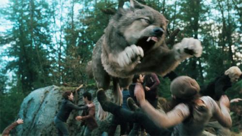 File:Wolves attack.jpg