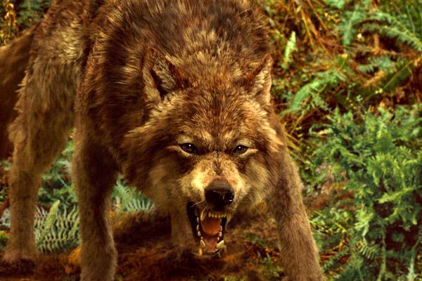 File:Newmoonwolf.jpg