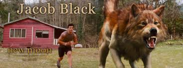 File:Jacob black wolf.jpg