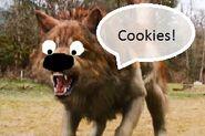 Jacob the dog