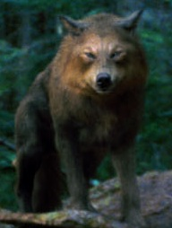 File:Wolves - Copy.jpg
