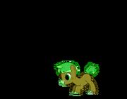 Pony Cam