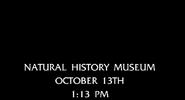 New York Adventure Natural History Museum