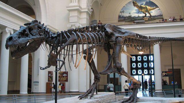 File:Tyrannosaurus Sue.jpg