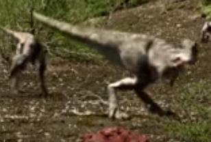 File:Many Tyrannosaurus Chicks.png