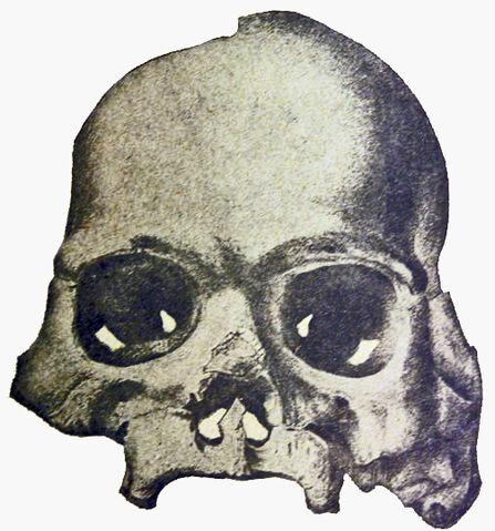 File:Calaveras Skull.jpg