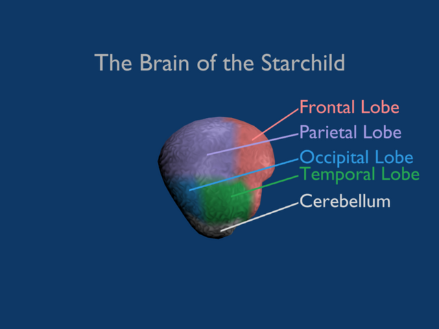 File:Starchild-brain-2.png